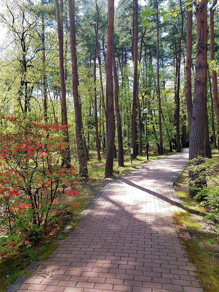 path hakushu